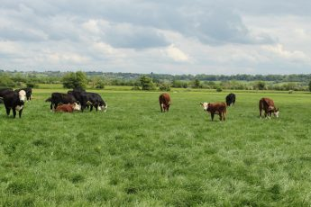 The Cattle Escape to the Country to find themselves a new Ideal Home